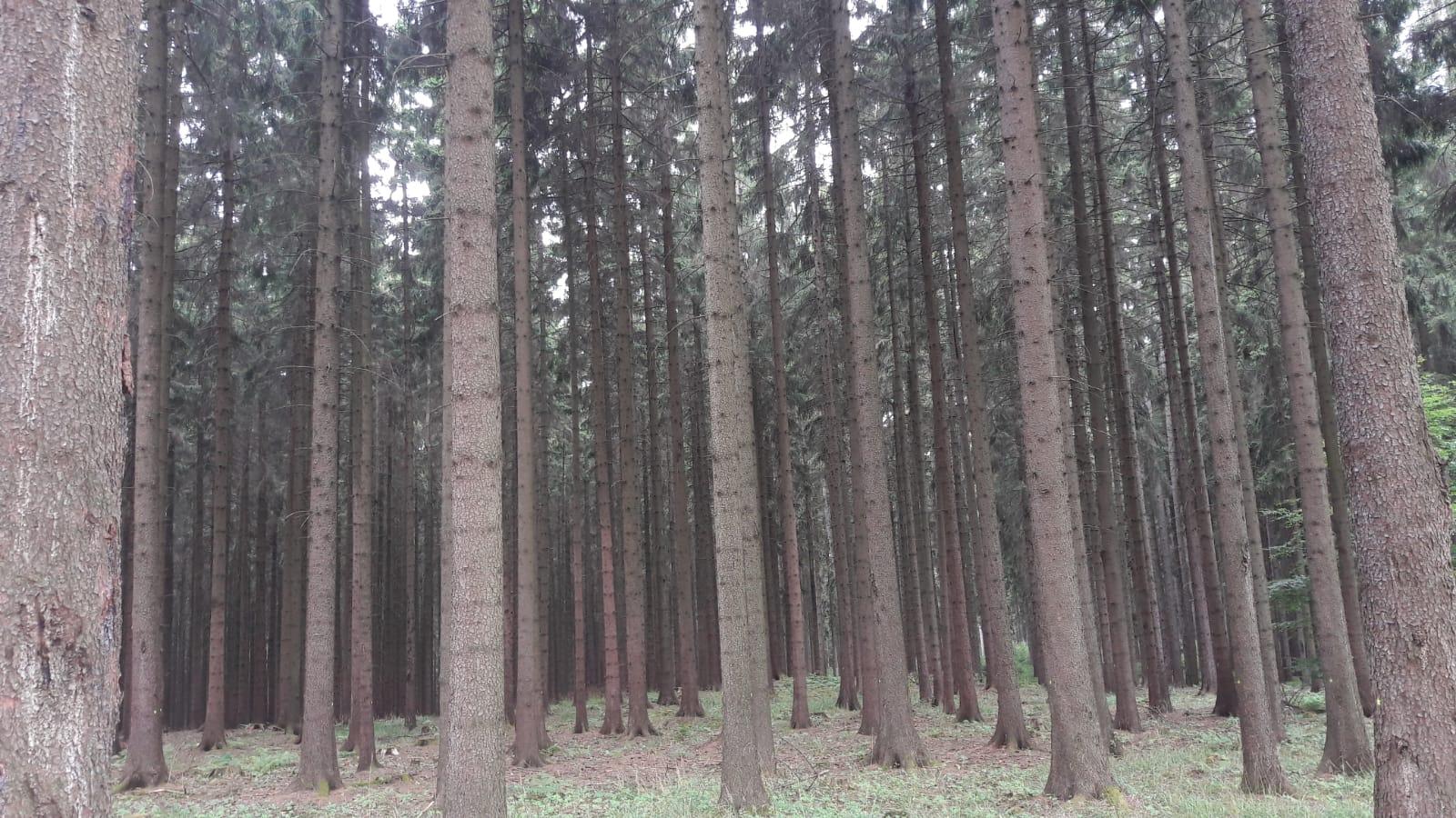 Odkup lesa na panju megales